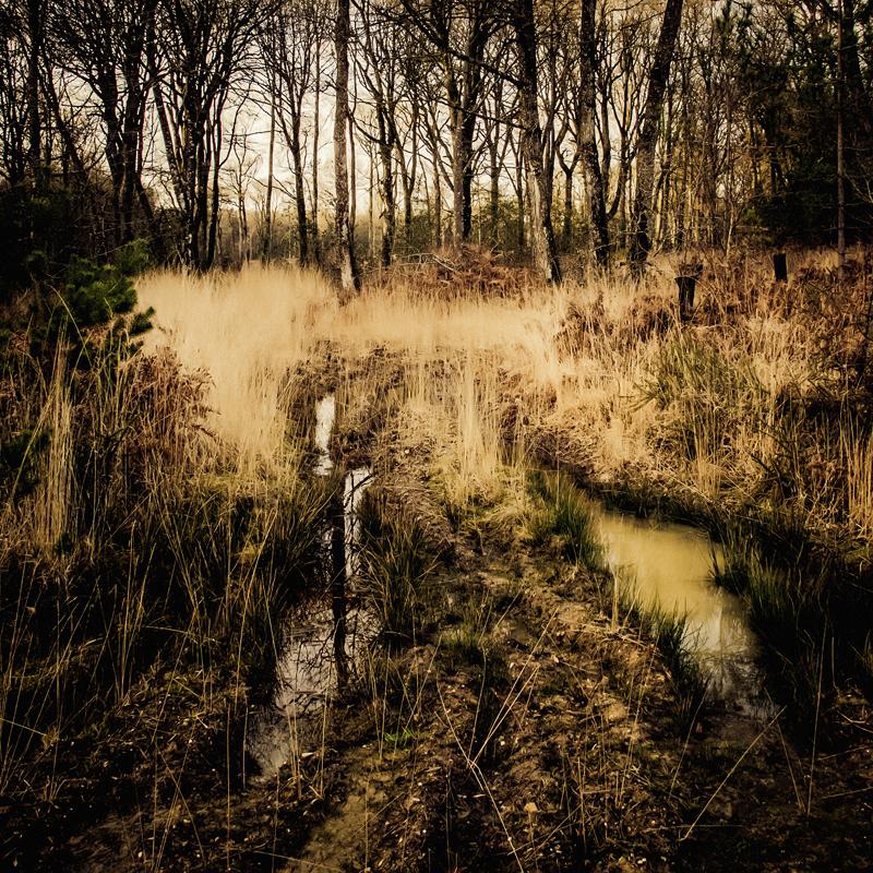 Landscape 2014#2